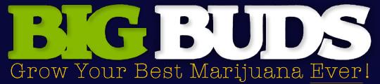 Big Bugs Magazine