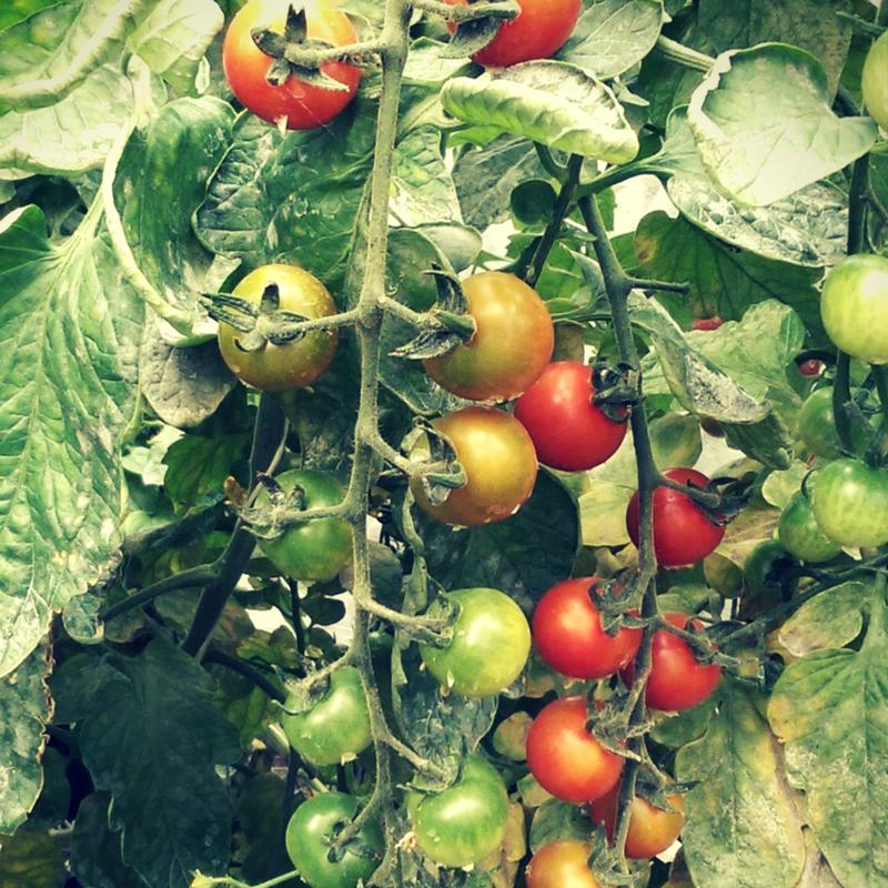 harvest 2.png