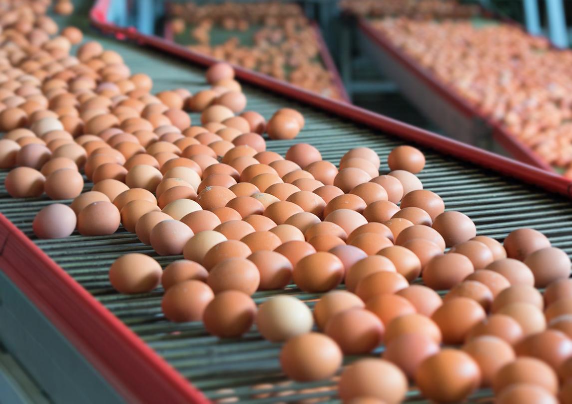 Egg Producers