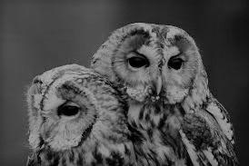 owls%2B3.jpg