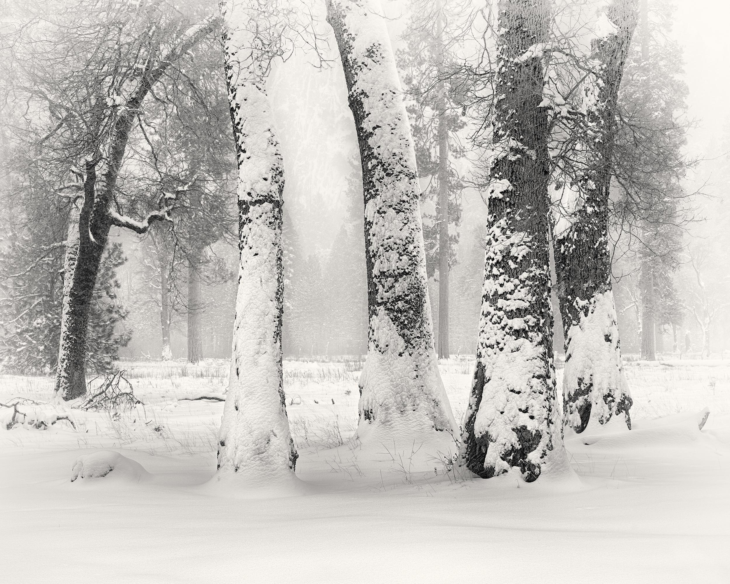 Black Oaks in Snow (1866-74)