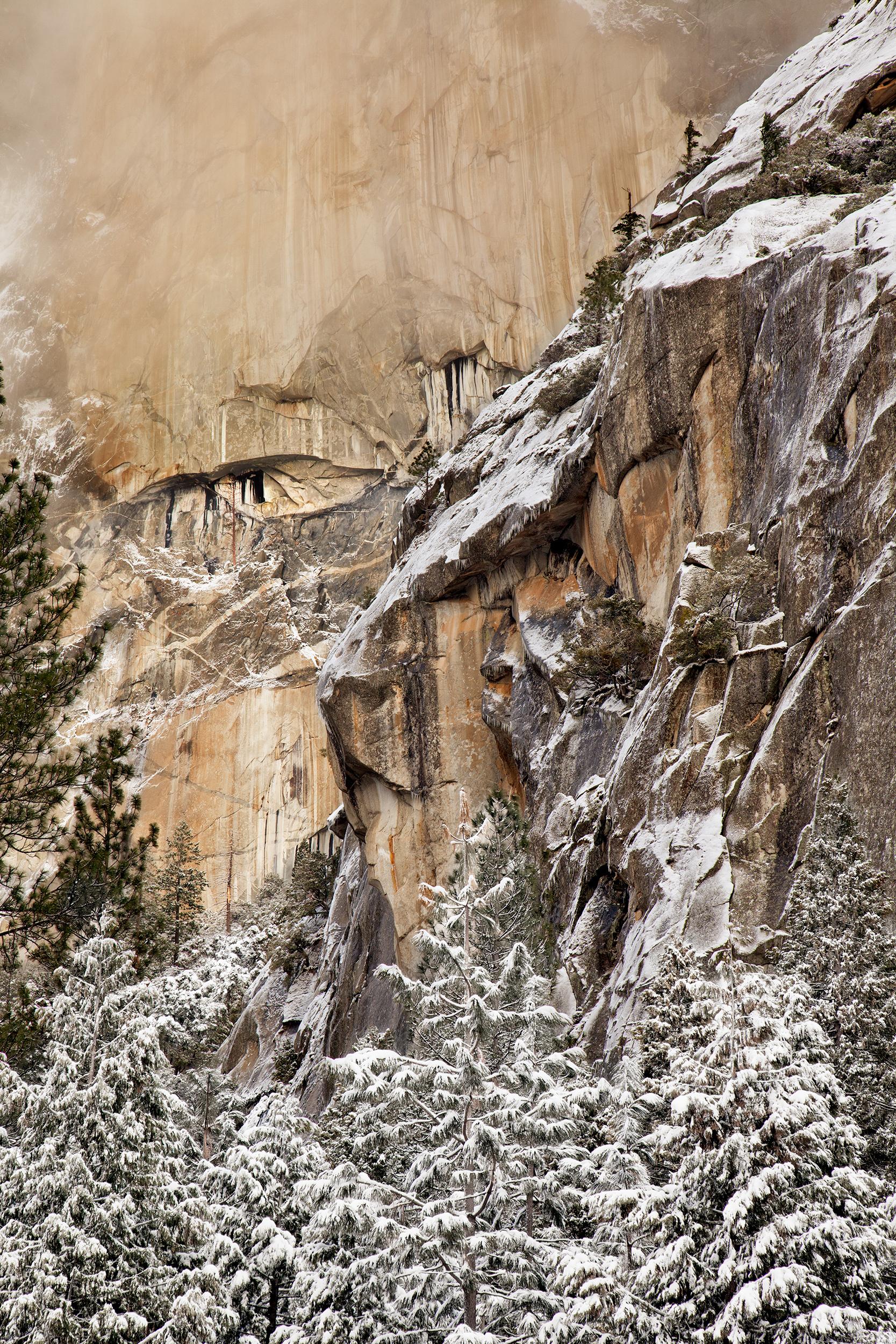 Winter Trees and El Capitan (9427)