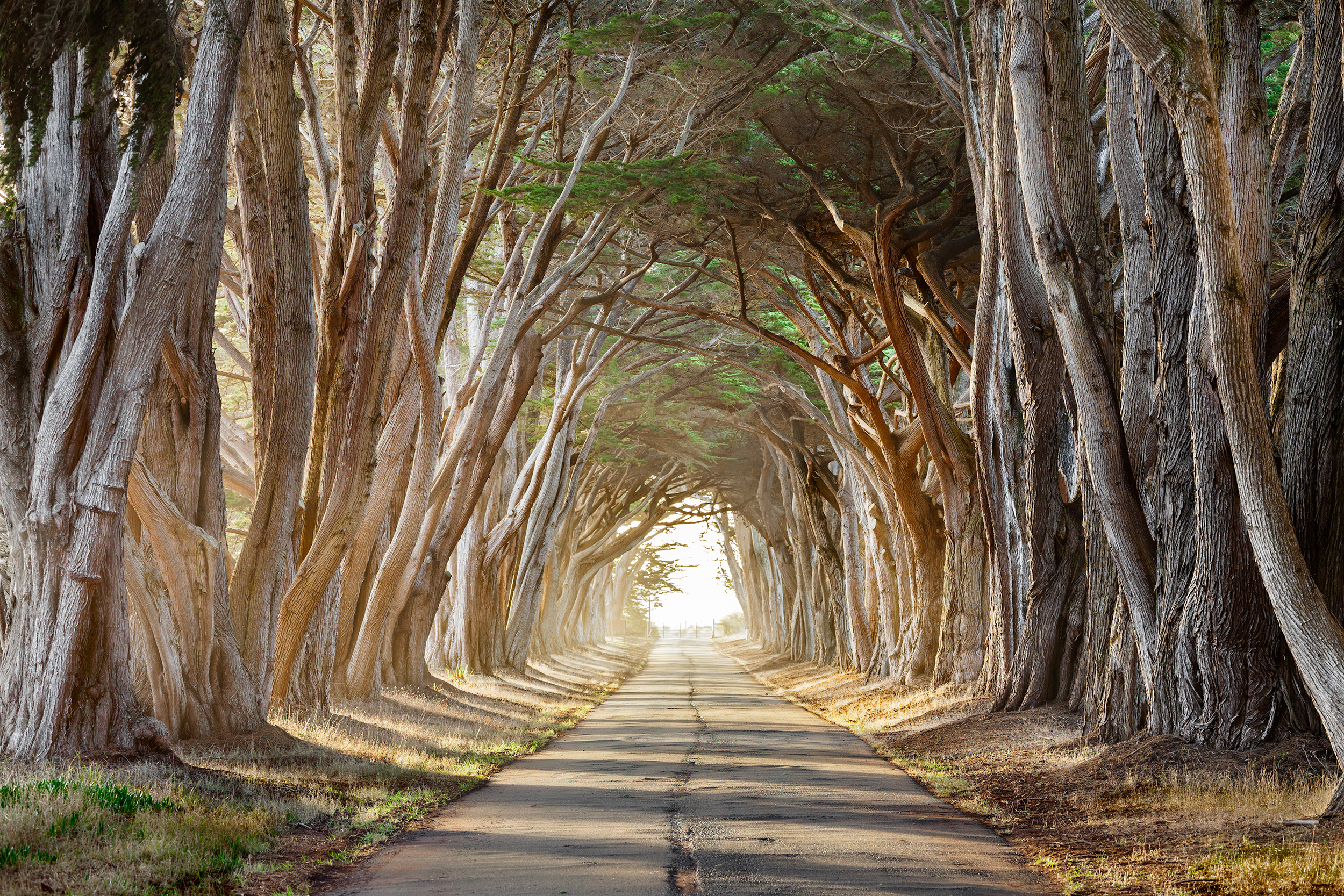 Tree Tunnel Morning - Point Reyes (2804)