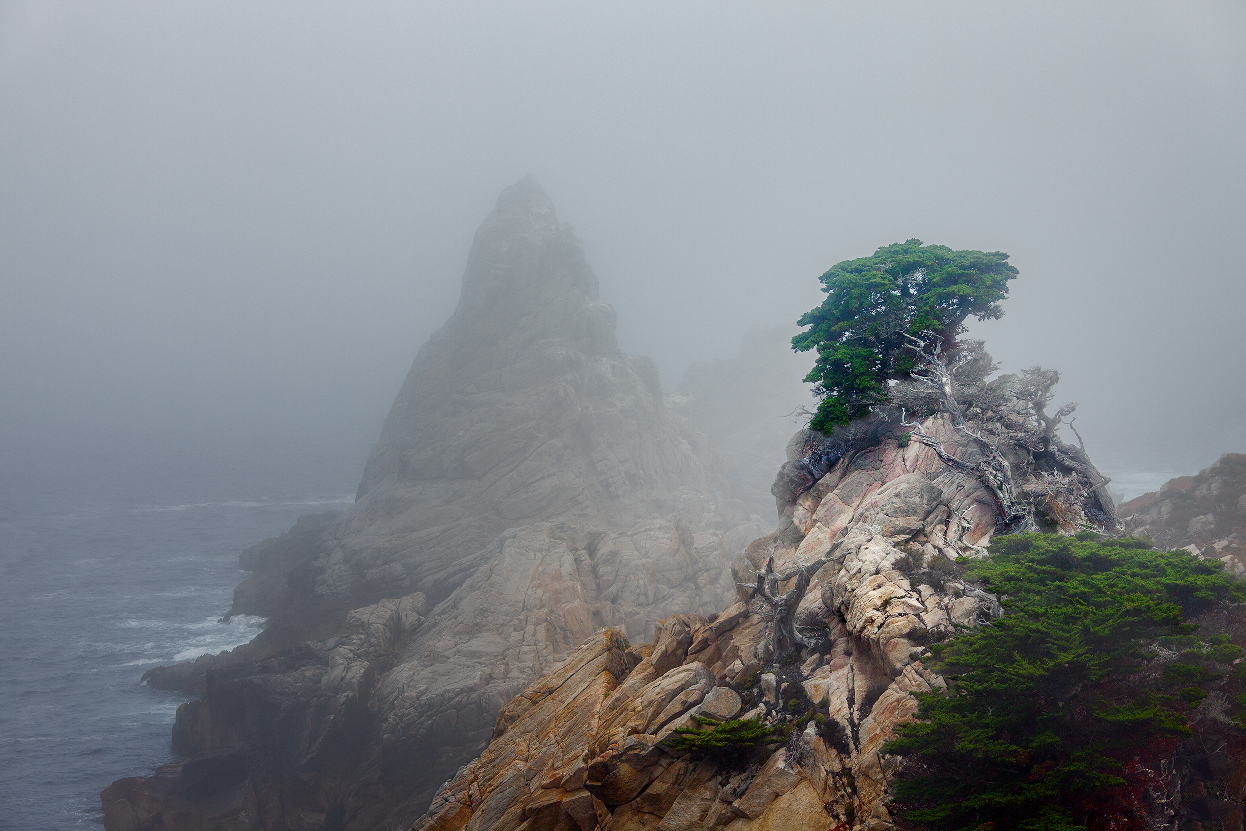 Cypress & Fog - Point Lobos (2942)