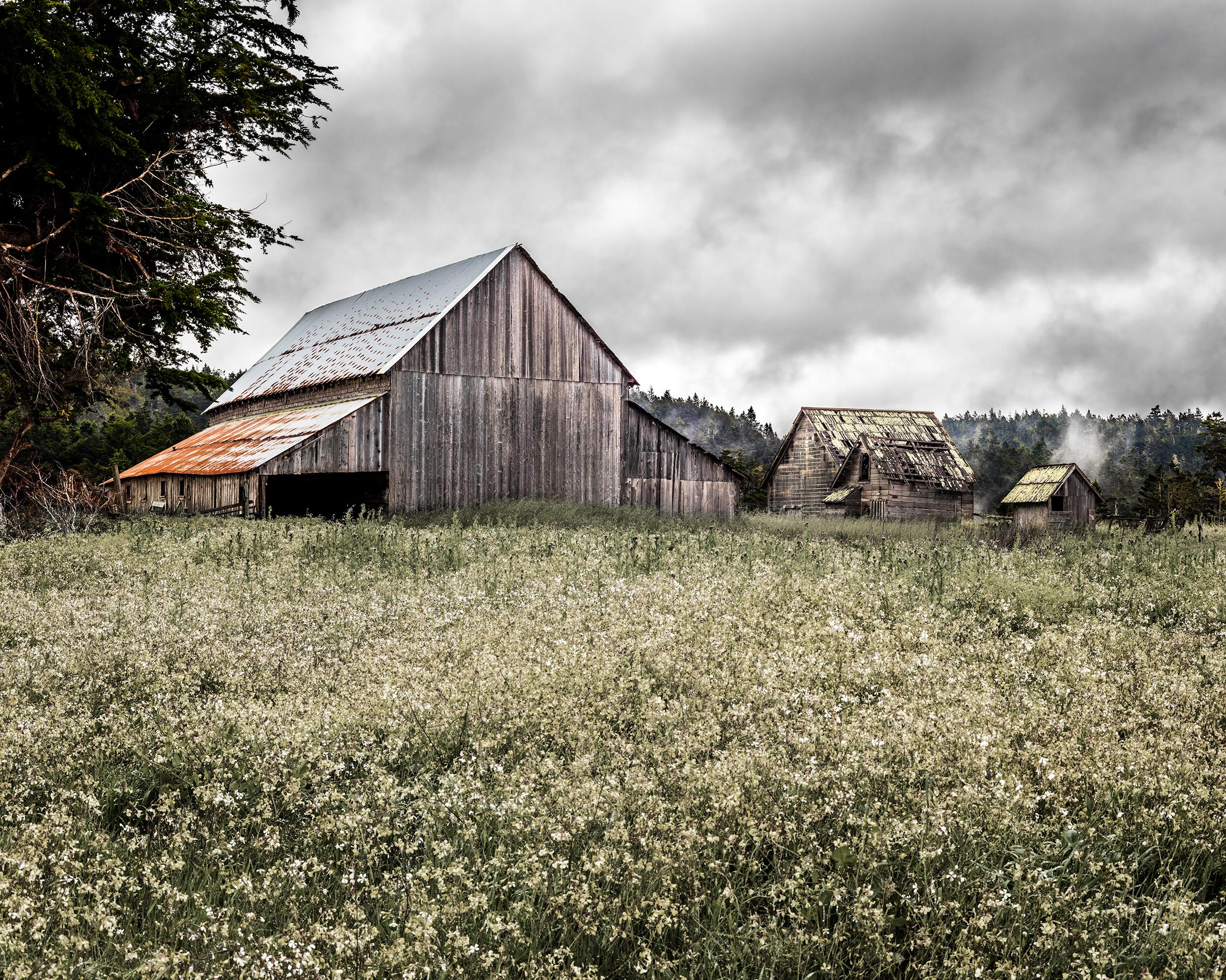 Spring Ranch Barn Study 1 - Mendocino