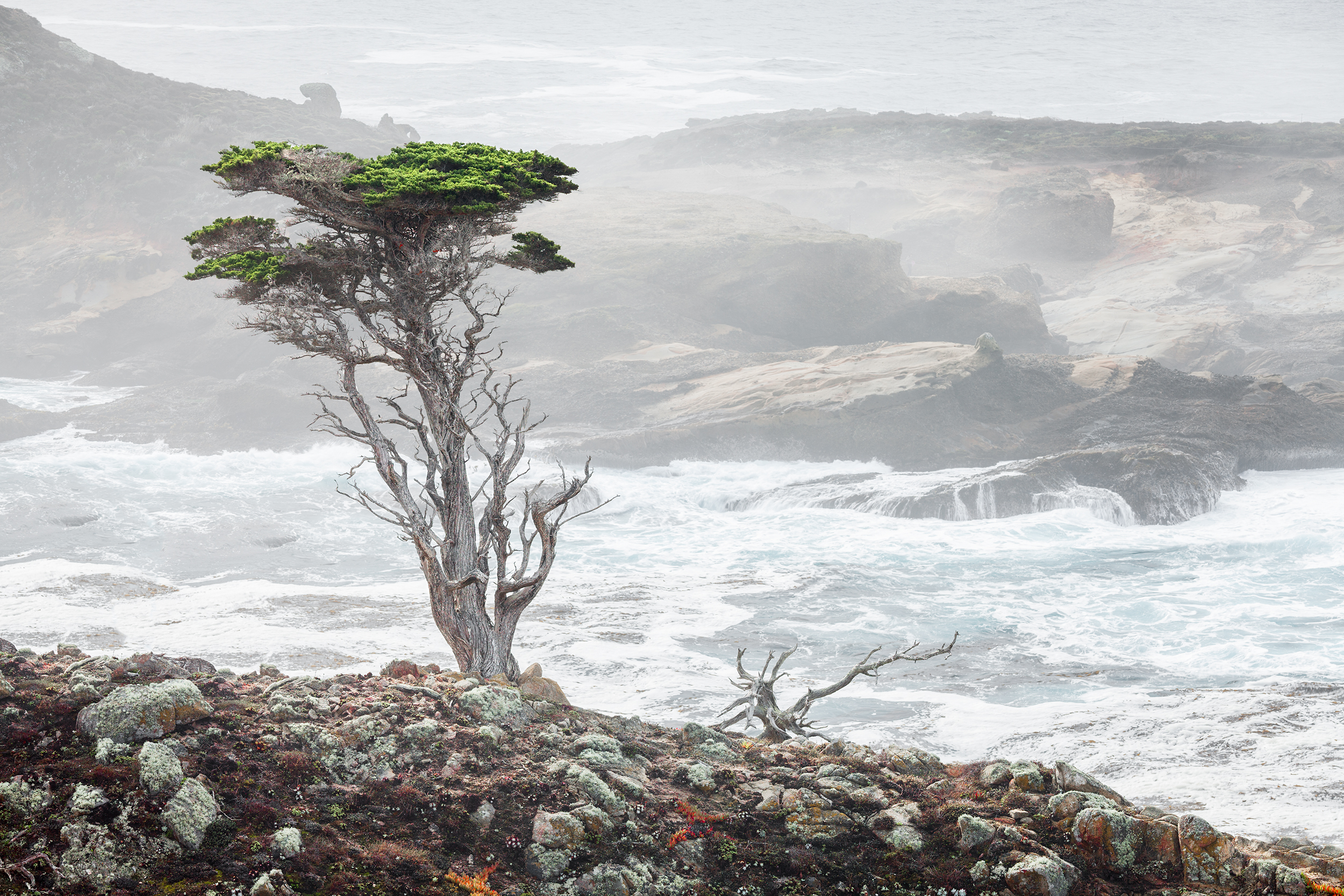 Small Cypress - Point Lobos (6100)