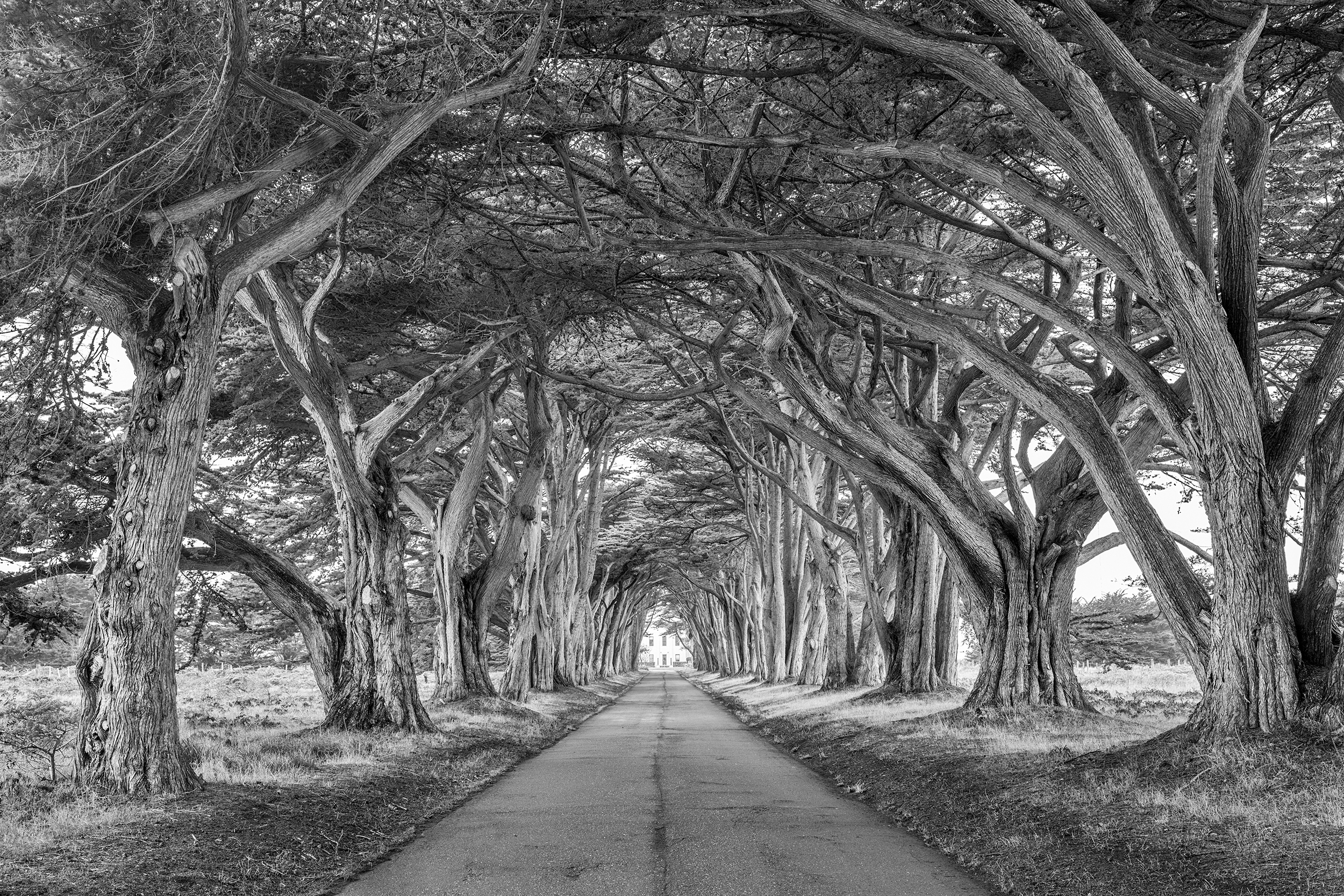 Point Reyes Tree Tunnel (2771)