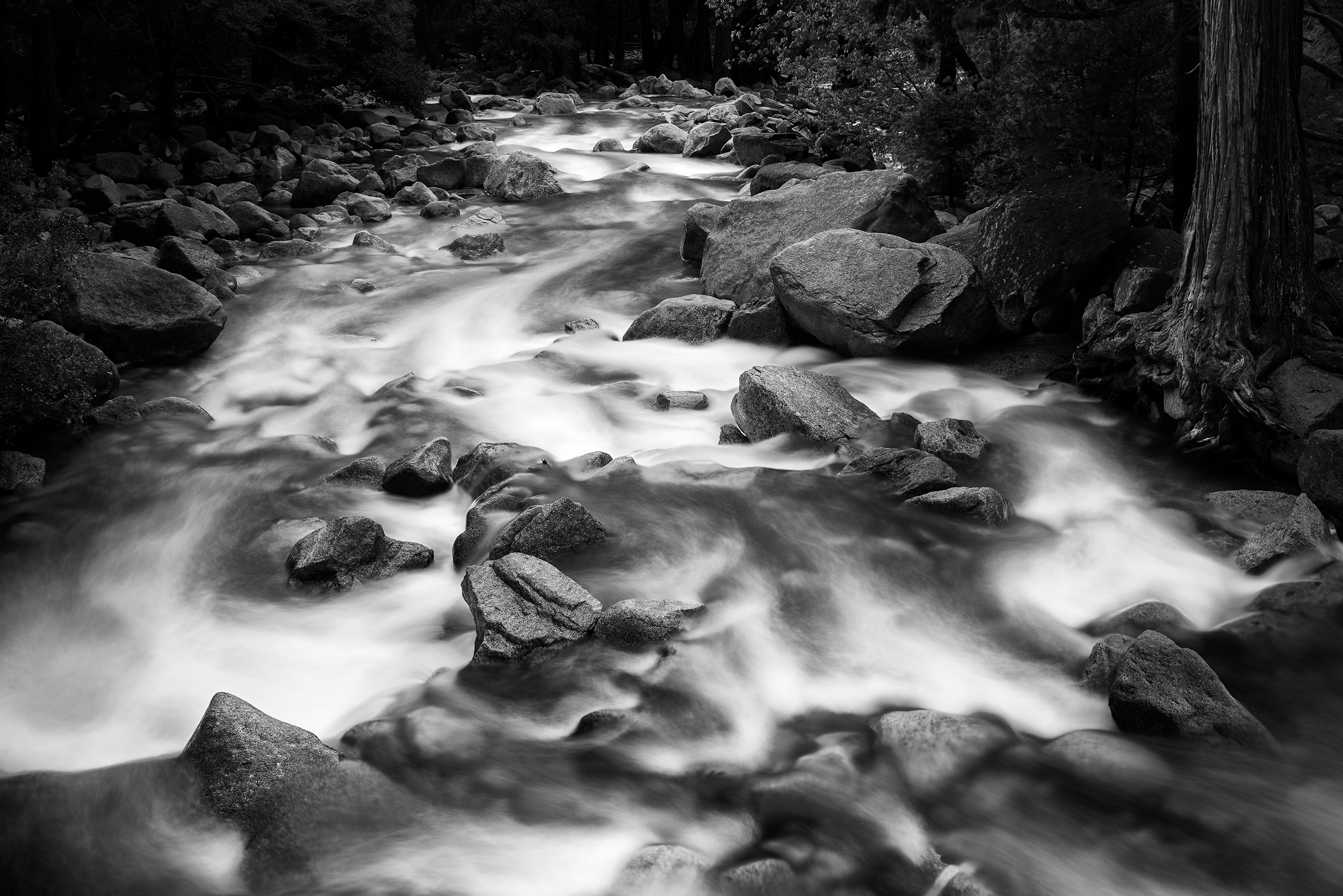 Yosemite Creek (0777)