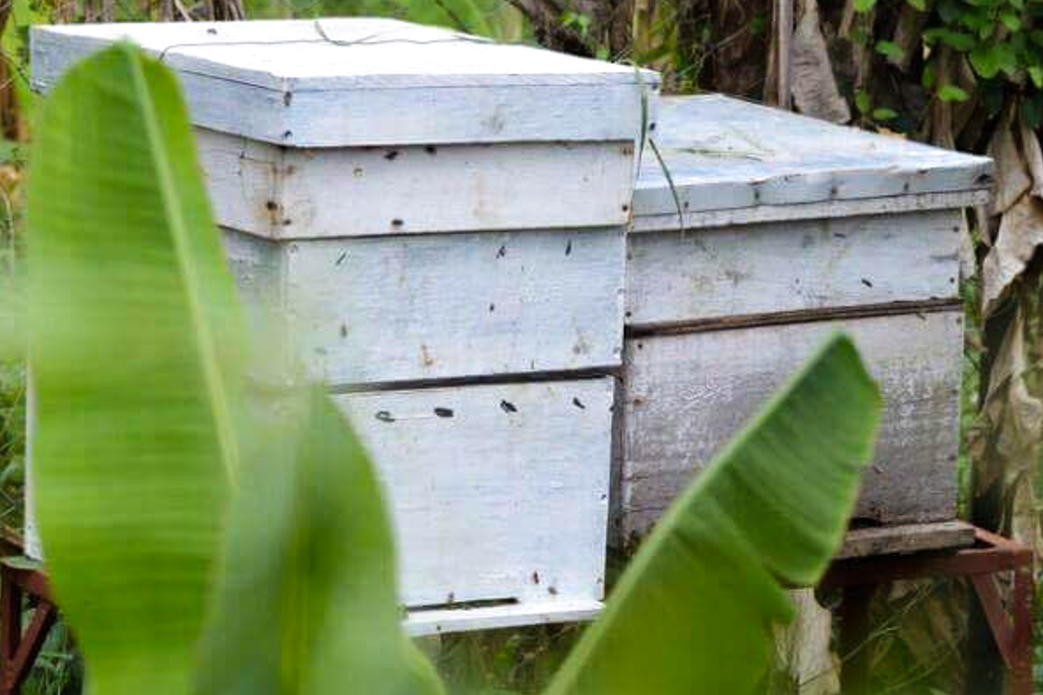 GreenHives