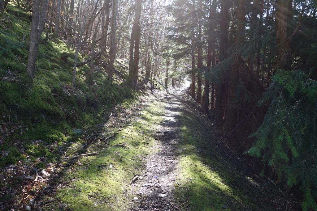 Web Berwyn Halt forest.JPG
