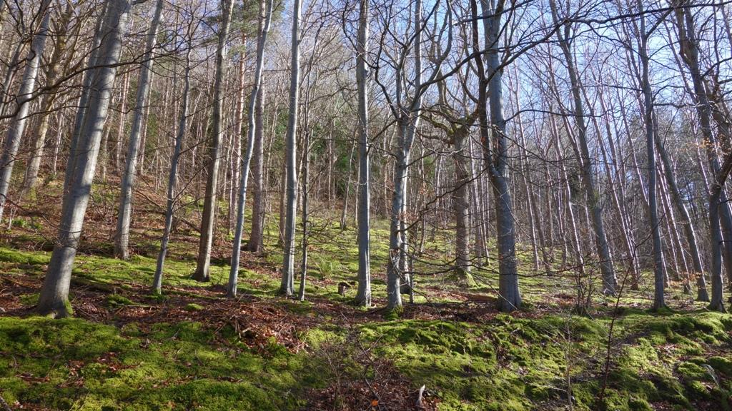 Web Berwyn Halt trees.JPG