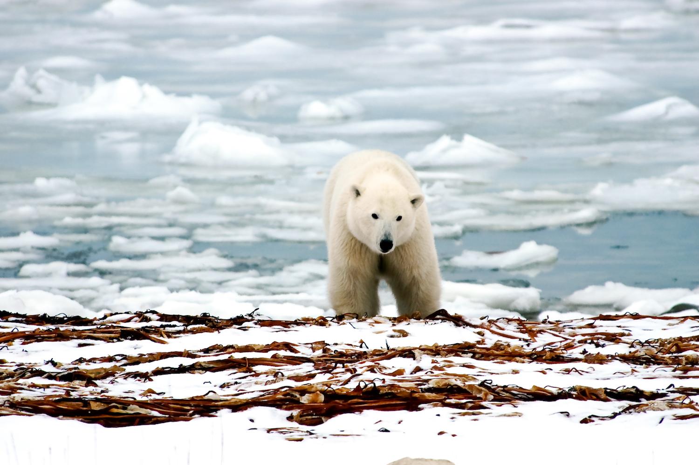 Arctic-Travel.jpg