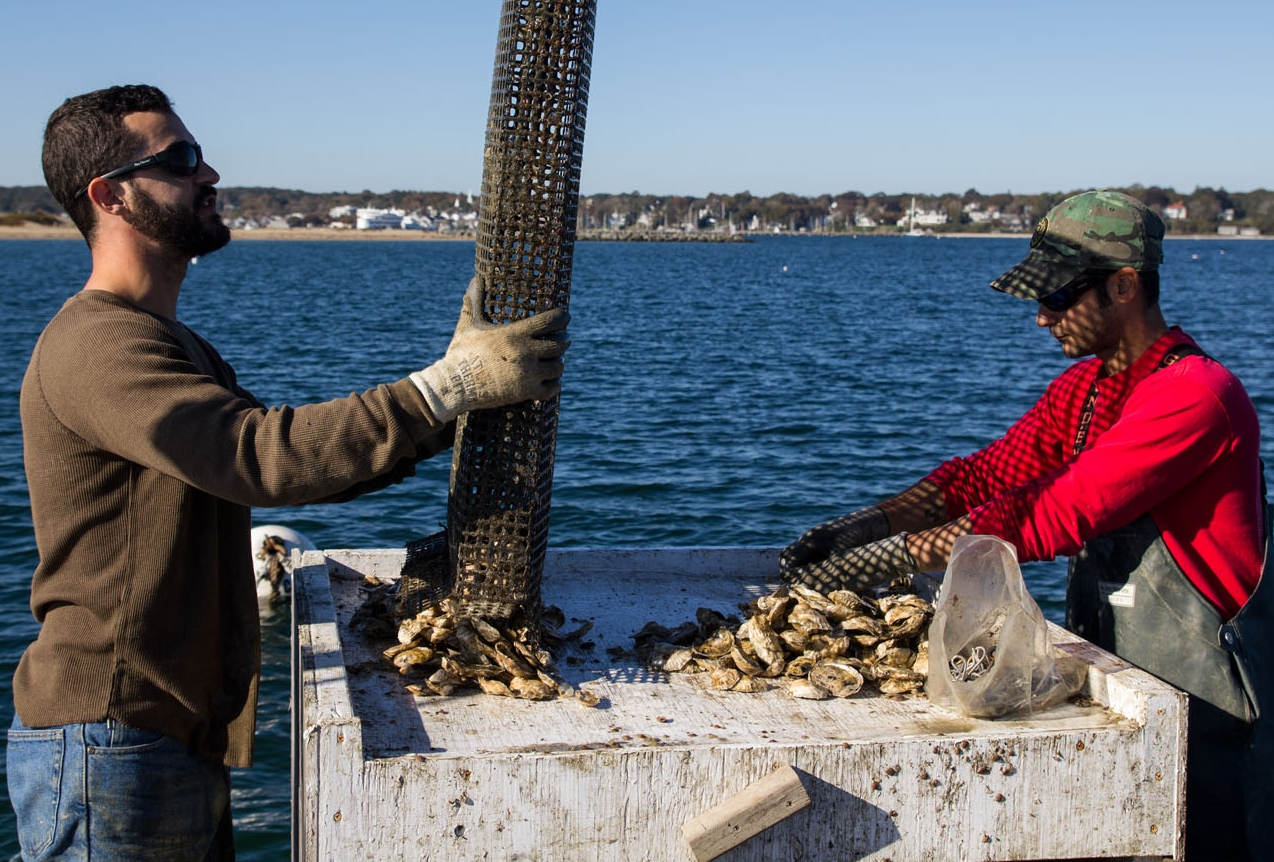 dan_greg-martino-oysters-2.jpg