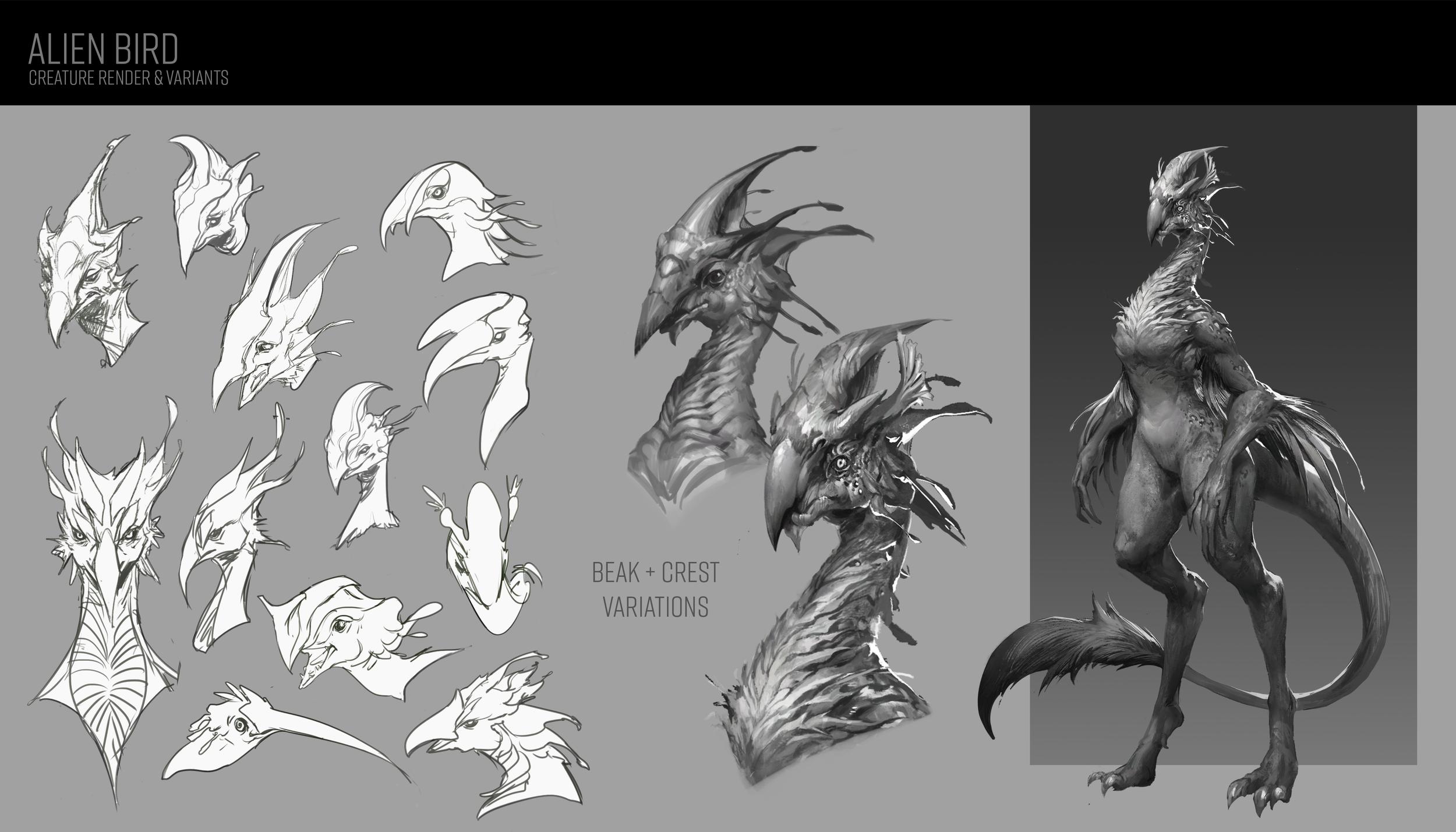 Bird Sheet.png