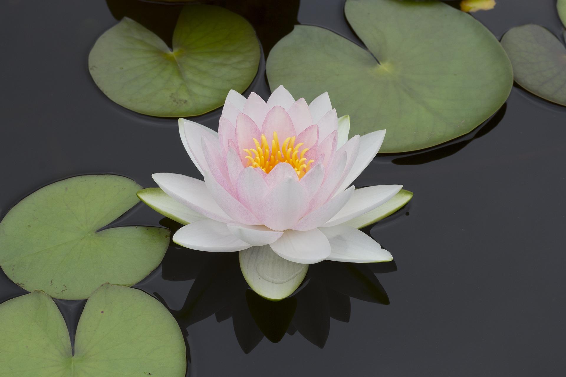 flower-1682921_1920.jpg