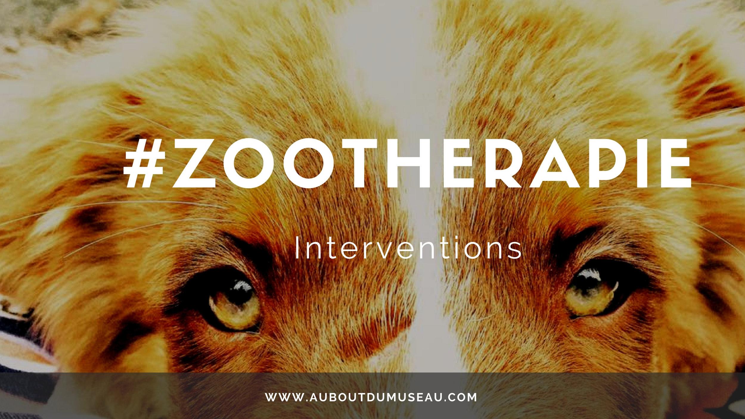 Zoothérapie youtube banniere.jpg