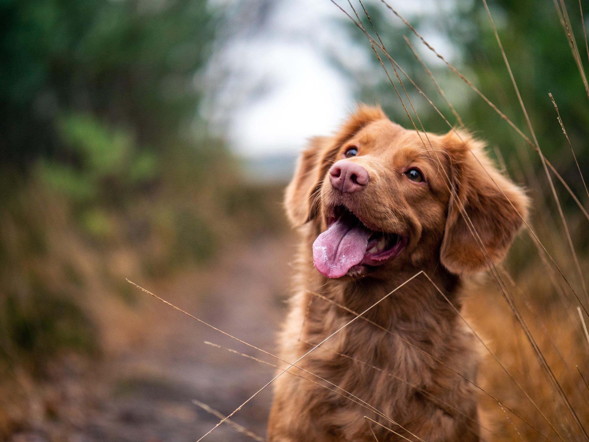 chien heureux.jpg
