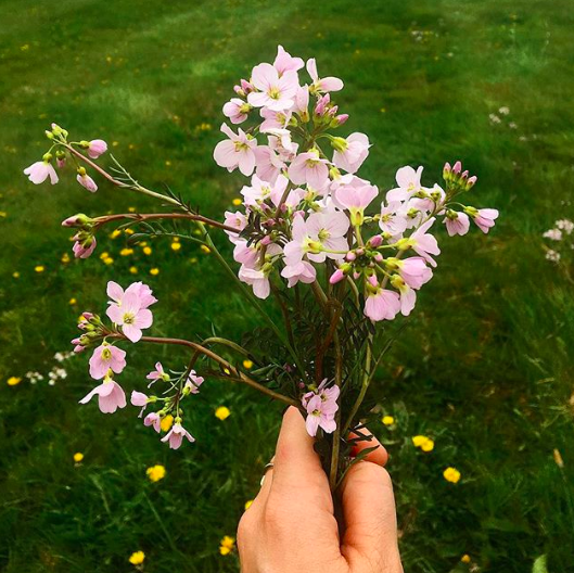 Apr 13, 2017 - Wild flower picking 🌸 I trampled so many of these before seeing them and then decided they'd look nicer on the kitchen table than squashed under my wellies.