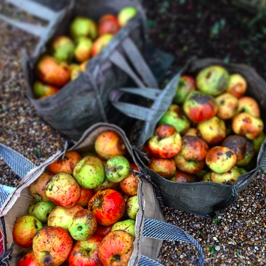 Mar 12, 2018 - These apples were happily left by our neighbours to feed the pigs - again another helping hand from our 'community' that we found ourselves in. Raising pigs on such a small scale meant that sustainable practices were relatively easy to achieve and our supply chain was straightforward. With larger scale farming or even in bigger businesses this is not always as achievable. As much as it's easy to tar big corporates all with the same bad brush, I'm not sure this is helpful or useful. Big corporates can make huge changes that can have huge repercussions for many consumers and can also help lead the way for other organisations to follow. Tomorrow I'll be chairing a couple of panel discussions at the Millennial 20/20 conference, one of which will be looking at how we now shop, eat and consume. This session will explore the forces behind a shift in FMCG and the changing consumption and behaviourial habits of today's customers. Company sustainability planning & supply chain transparency will be a key focus. What questions would you want to ask these brands/what do you think is most important when it comes to sustainability and brand transparency? On this panel @millennial_20_20will be @ryvitauk@walmart@hipchickfarms@onelovecocoa@burritokitchen