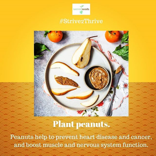 For best practices on growing peanuts in your climate, read Good House Keeping's guide: https://www.goodhousekeeping.com/home/gardening/a20706839/growing-peanuts/. #healthyliving #health #Strive2Thrive #gardening #gardeningtips