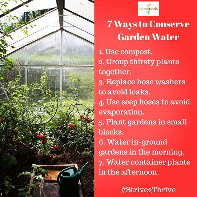 #consciousliving #Strive2Thrive #sustainable #conservewater #conserve #growthefuture