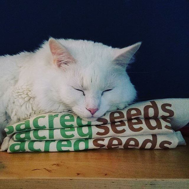 Photogenic and adorable. Raleigh is the best!  #sleepingonthejob #strive2thrive #thesacredseeds  #catloversforsustainability #microgreens #educate #eatwell
