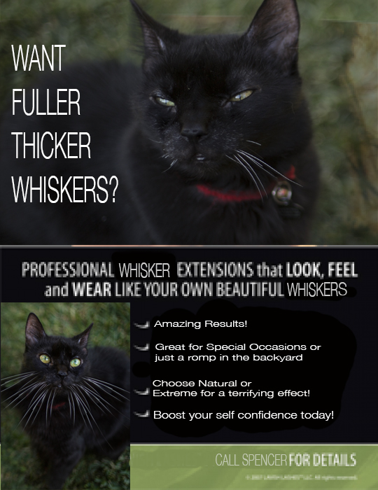 spencer whisker flyer.jpg