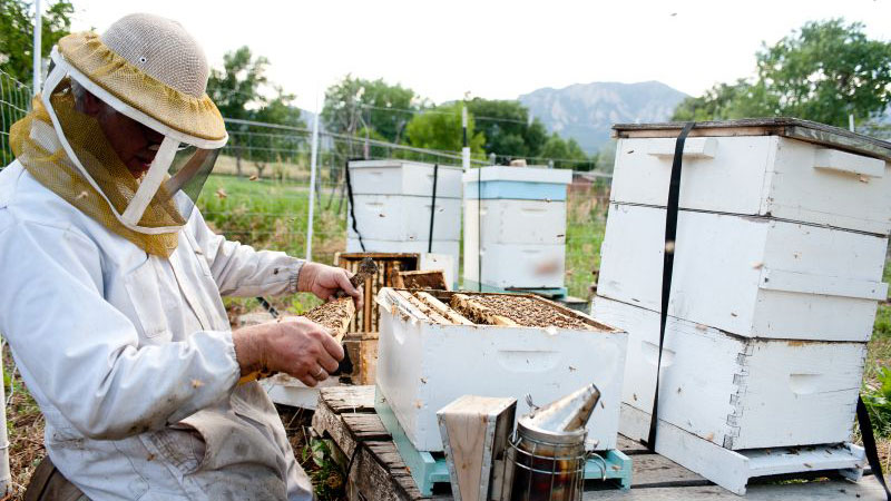Sourcing Honey and Caring for the Planet -