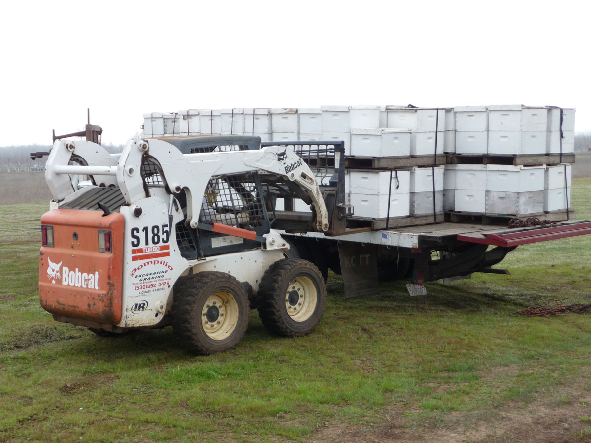 21-unloading-hives-for-orchard.jpg