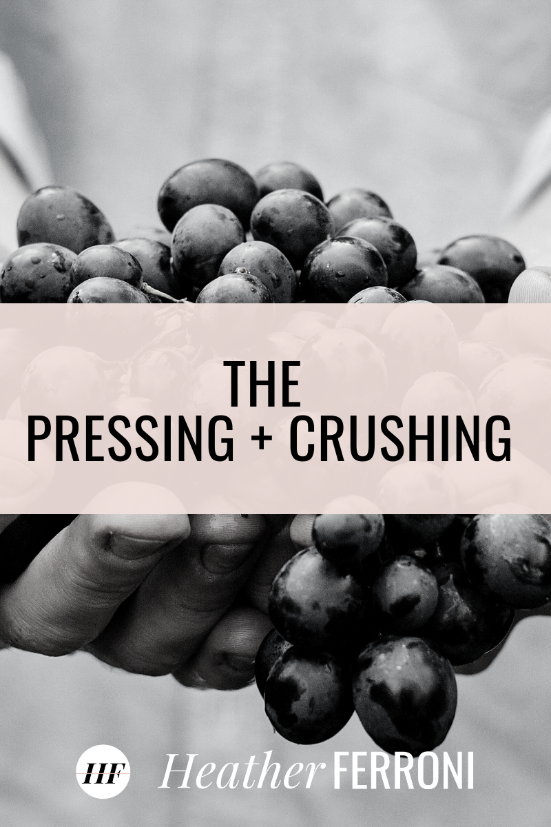 The Season of Pressing and Crushing
