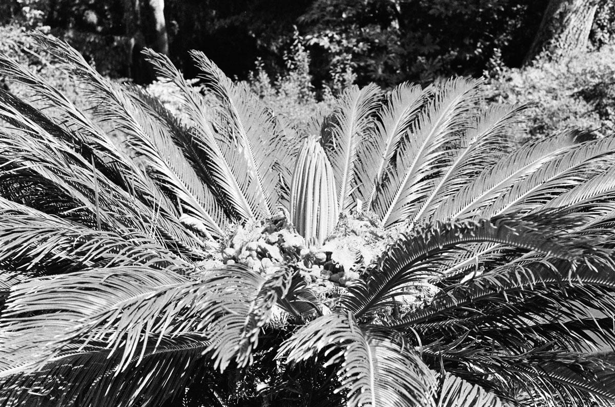 silvertree.jpg