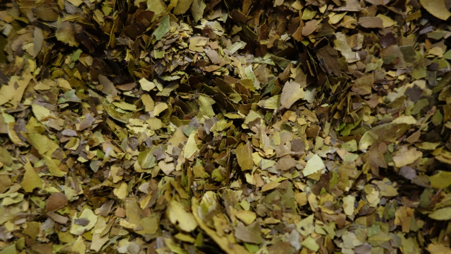 Yaupon_Tea_Leaves_ready_to_roast.jpg