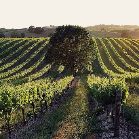 Hidden Oak vineyard2.jpg