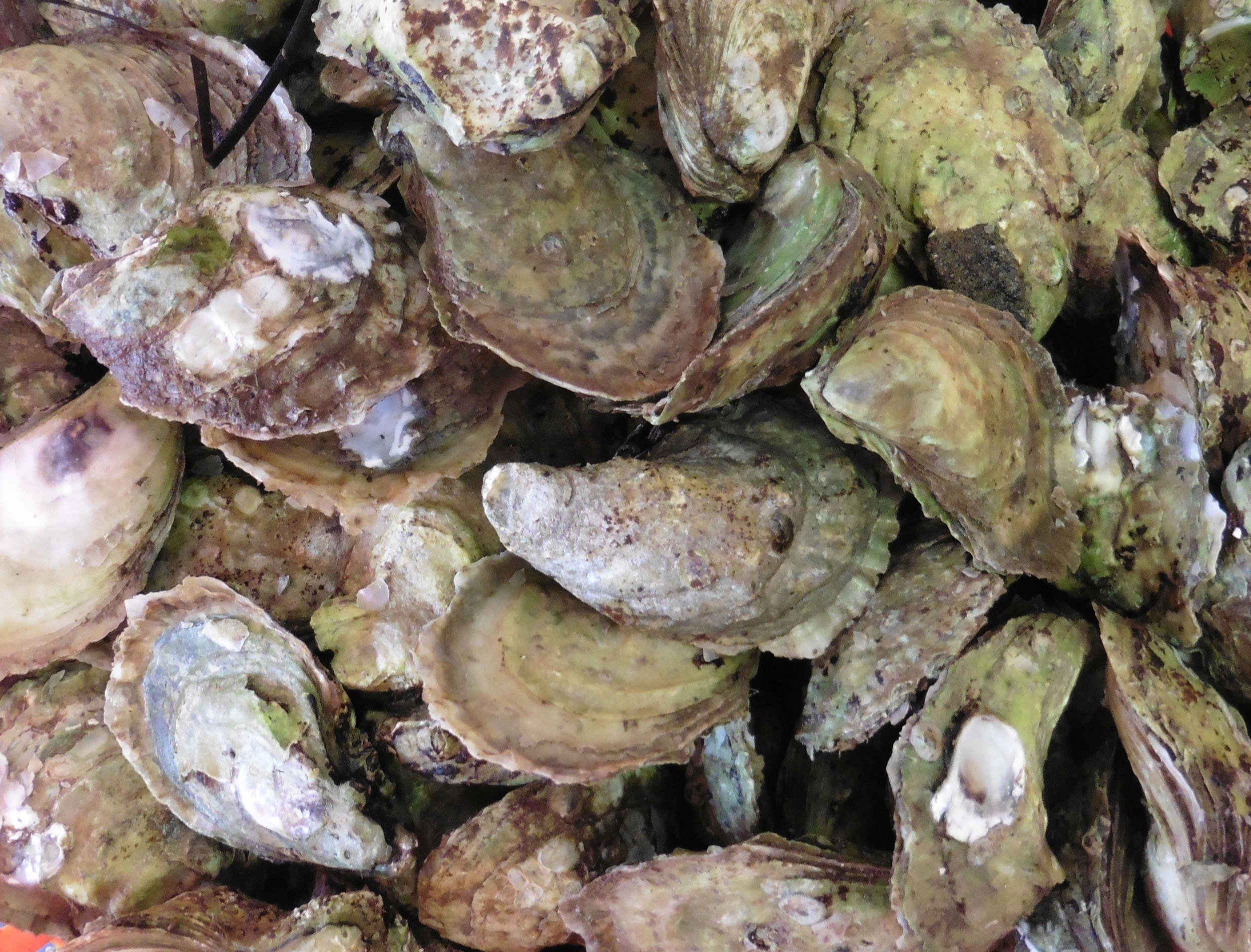 free oyster image from morguefile.jpg