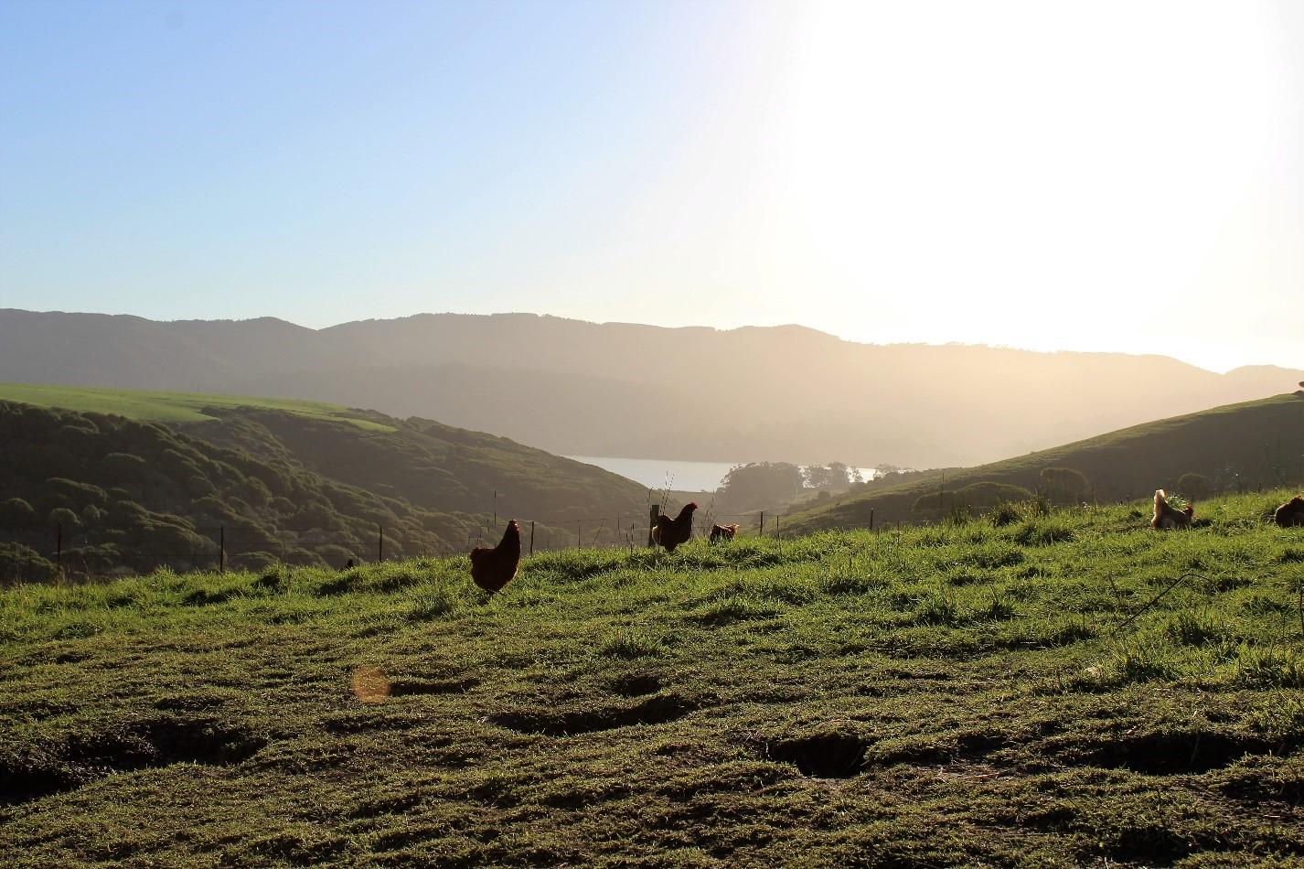 Tomales Bay Pastures , © Jeff Stump
