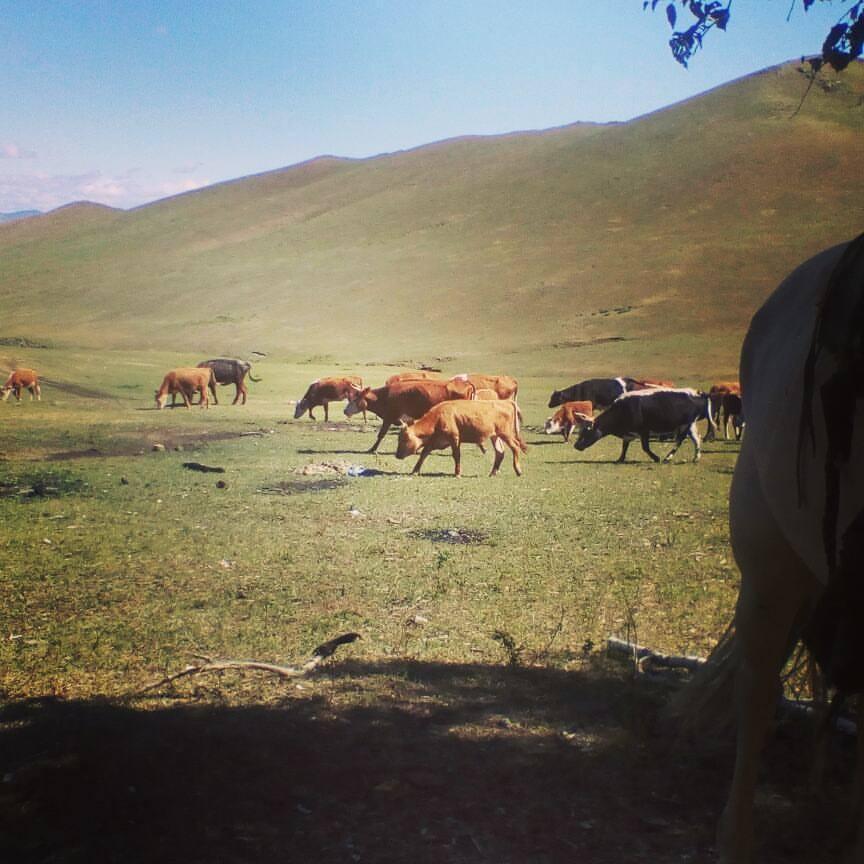 herds.jpg