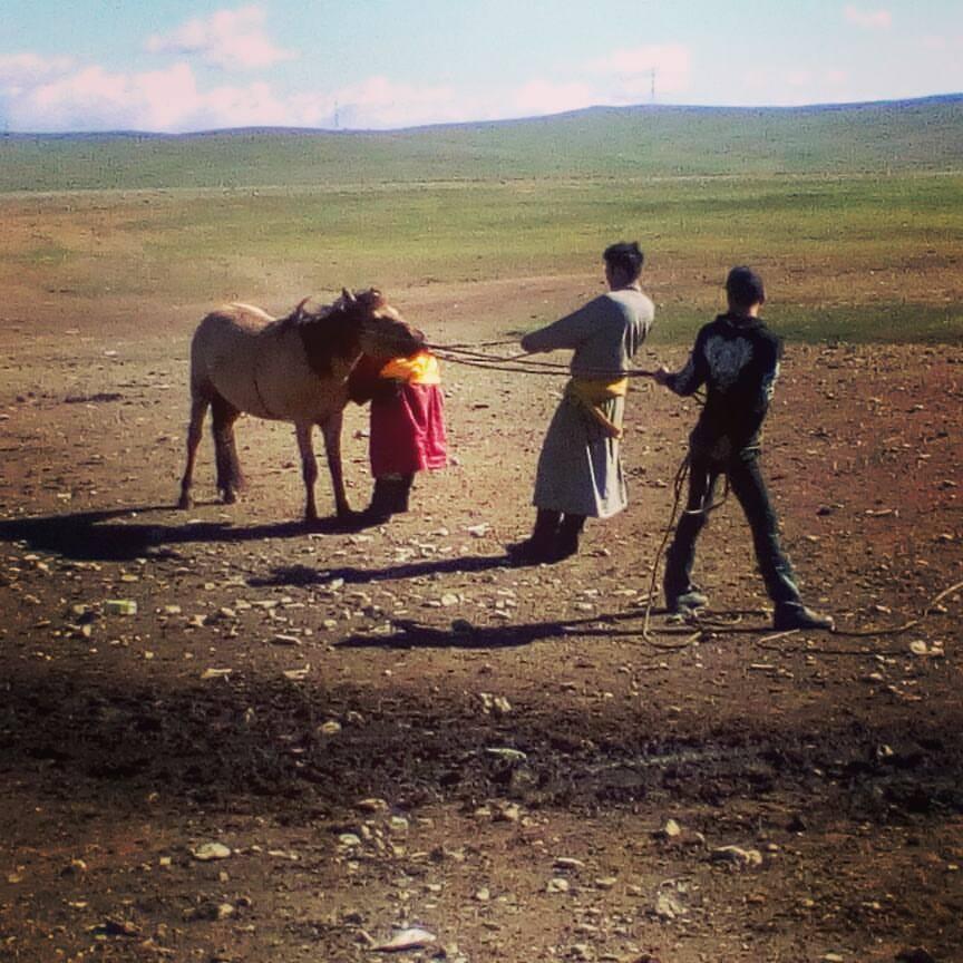 horse-mongolia.jpg
