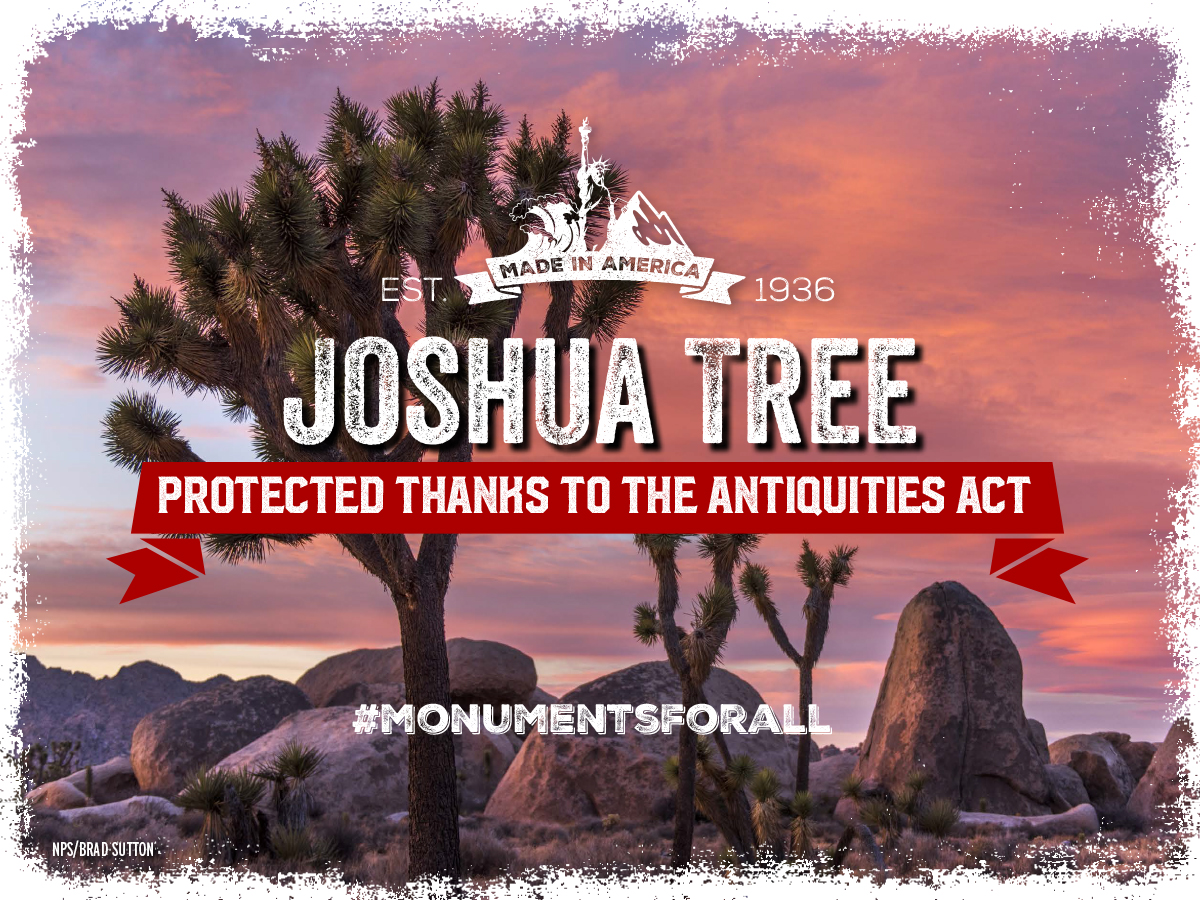 Monument-1200-x-900-Joshua-Tree-v1 (1).jpg