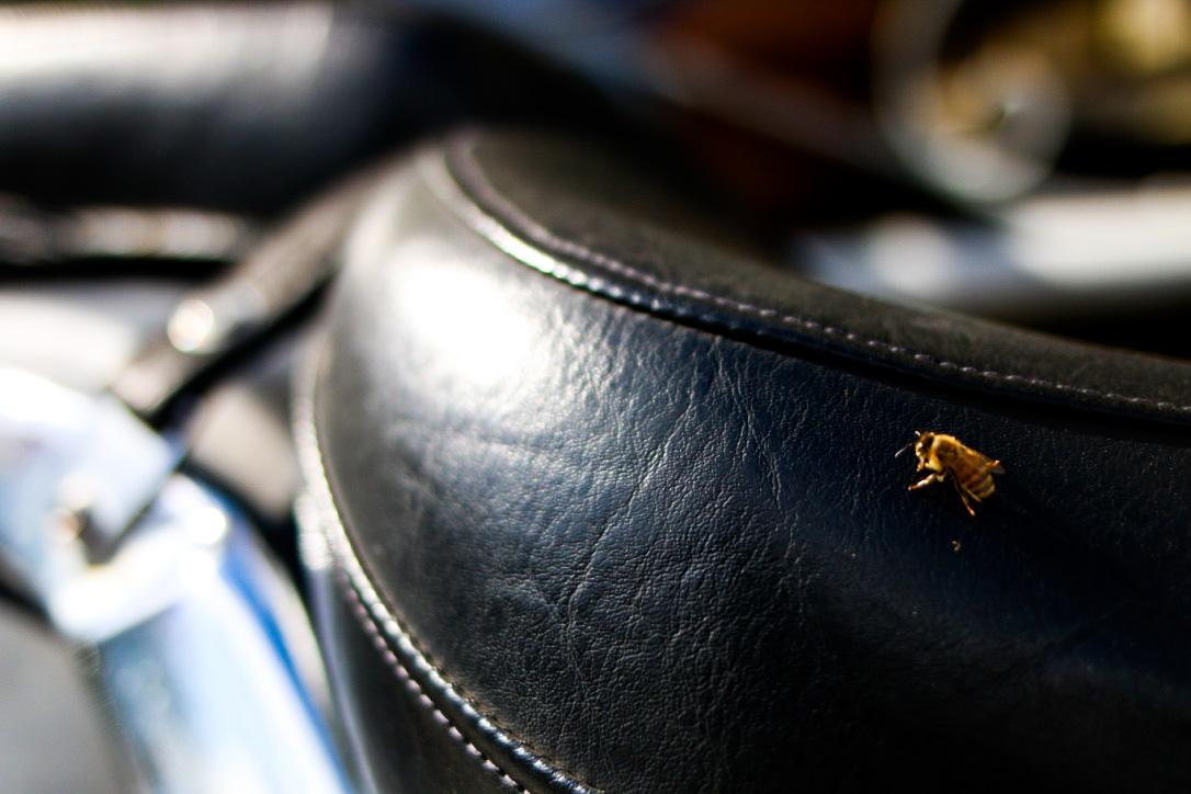 A bee sunbathing on a motorcycle.