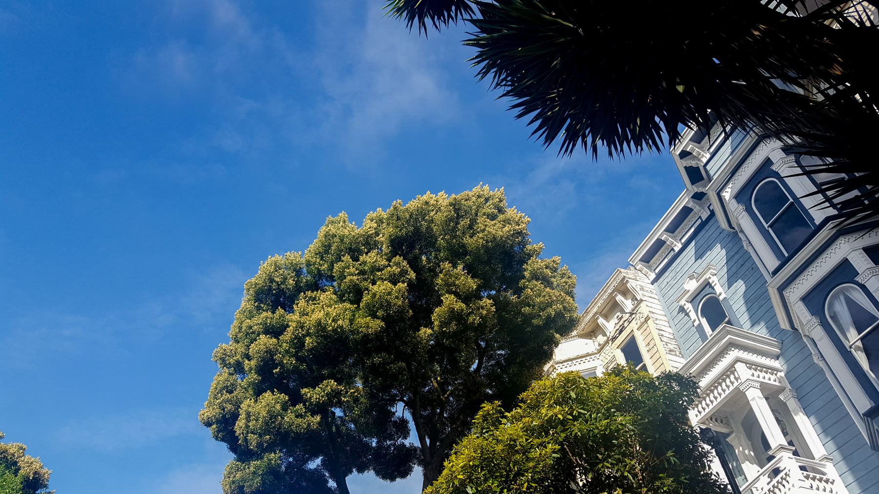 Looking up in San Francisco never ceases to make my heart flutter . . . in a good way.