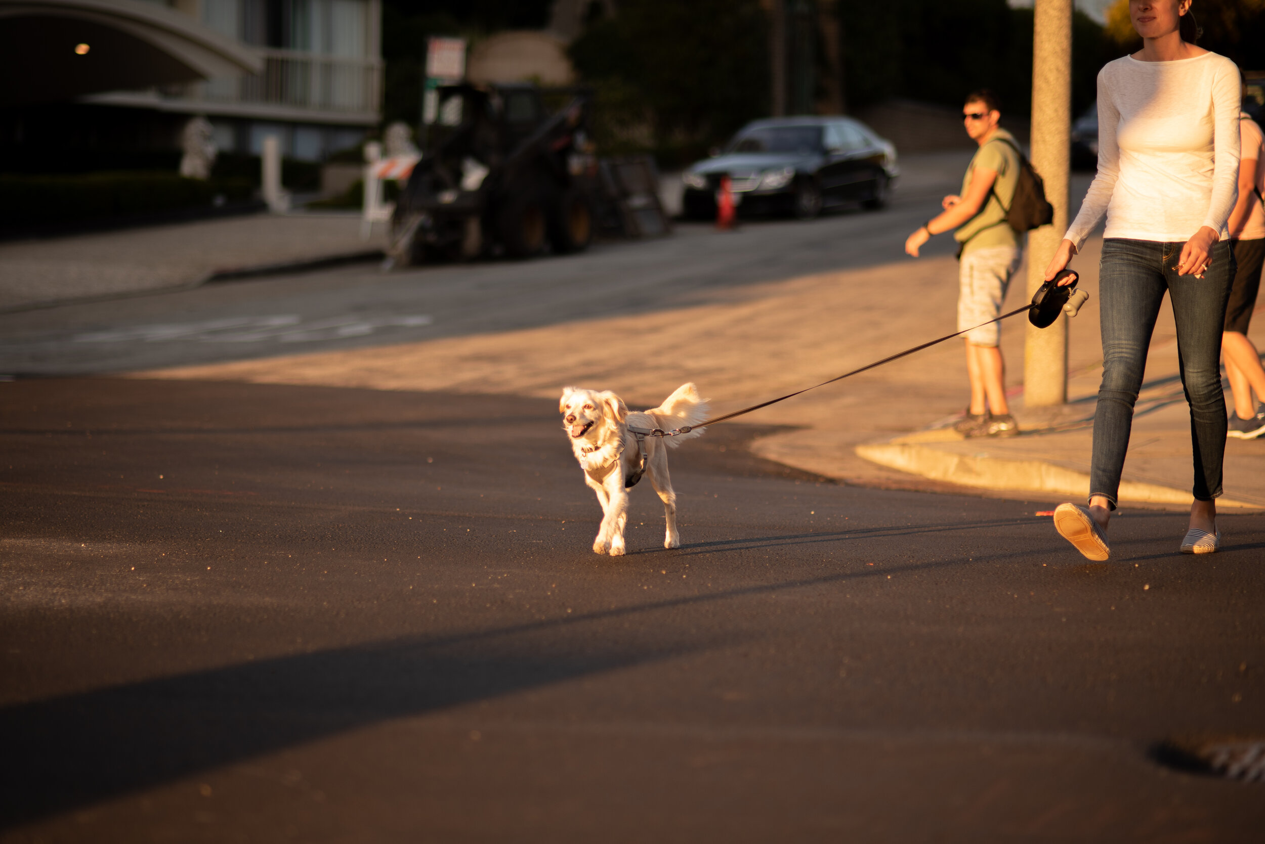 Dog in Pacific Heights 2019.jpg