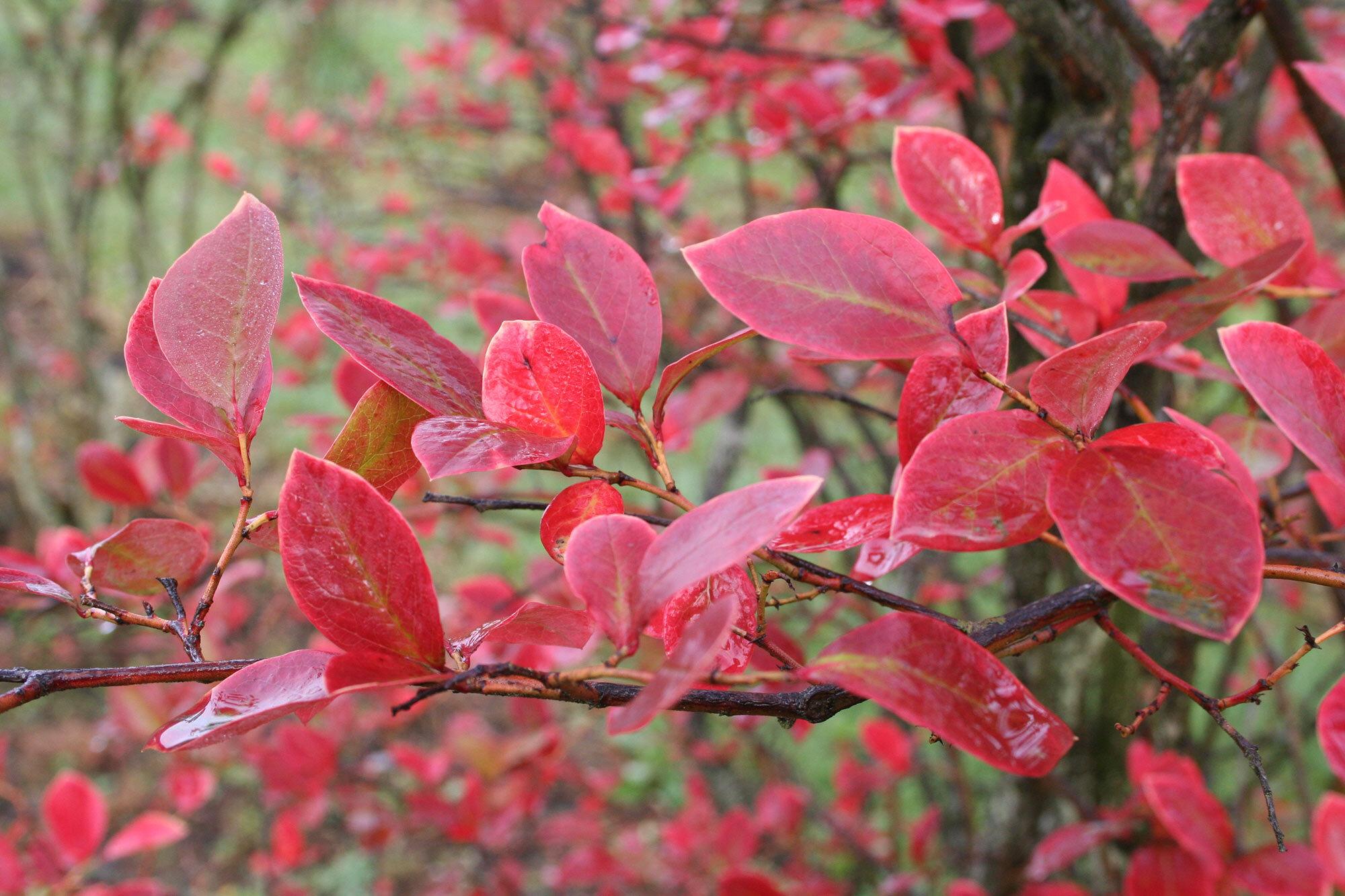 fall-bush.jpg