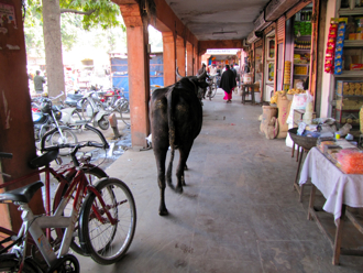 bazaar 11.jpg
