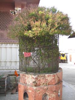 temple 9.jpg