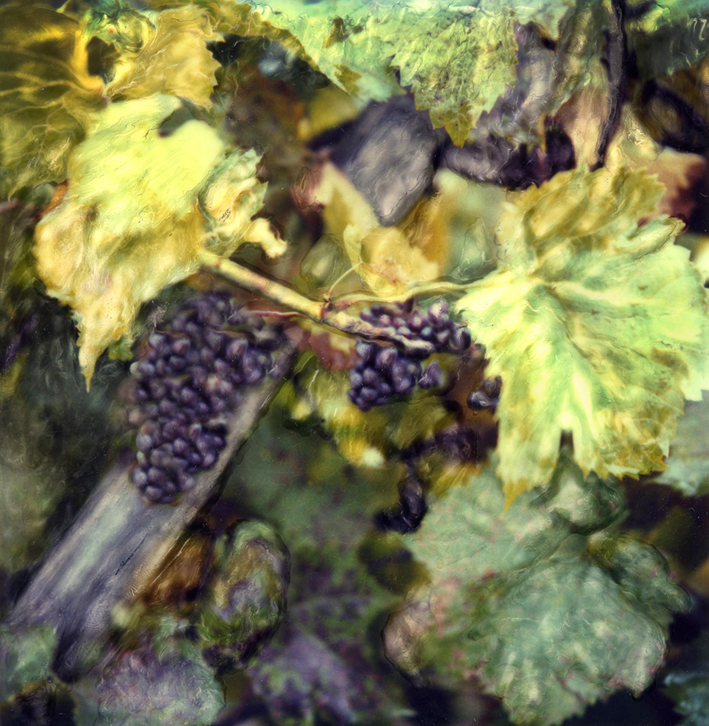 *Web_Grapes.jpg