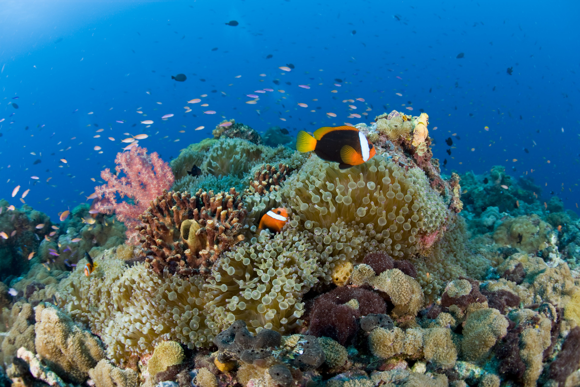 145527-png-beautiful-marine-life.jpg