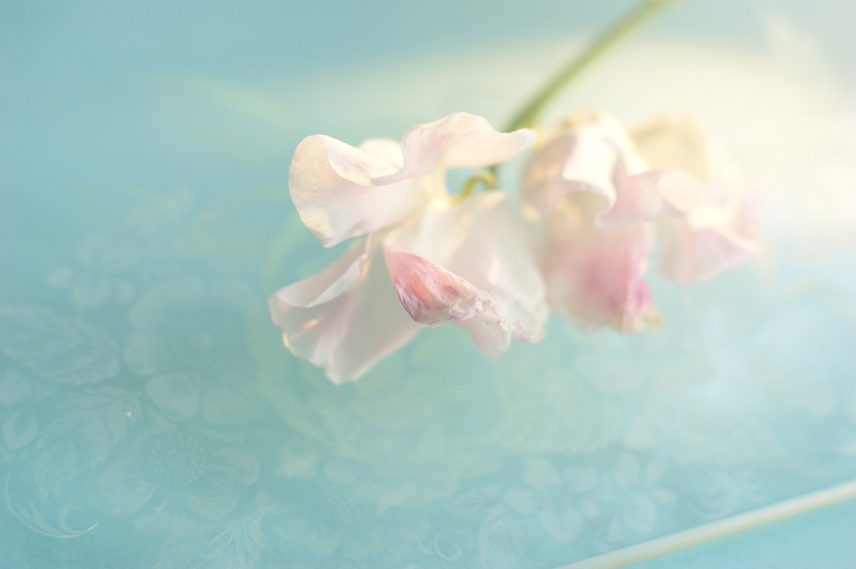 Shimano_12.jpg