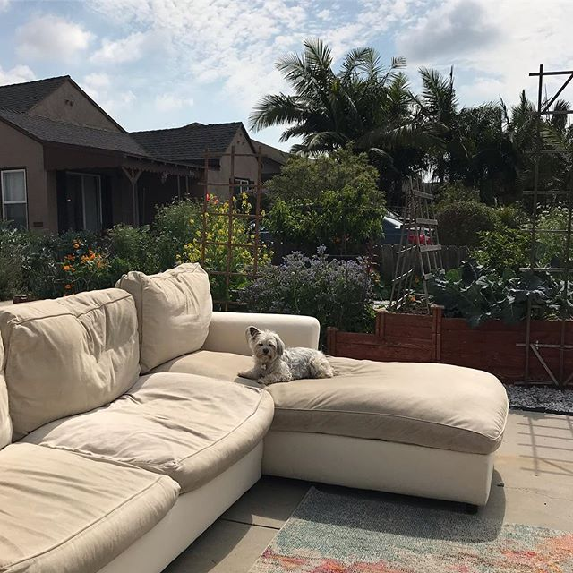 Make an offer.... My humans are selling this goose down restoration hardware sofa with washable and dye-able slip cover in Los Ángeles. They say no reasonable offer will be refused. . . . #estatesale #estatesalefinds #muttsofinstagram #inglewood #craigslist #restorationhardware