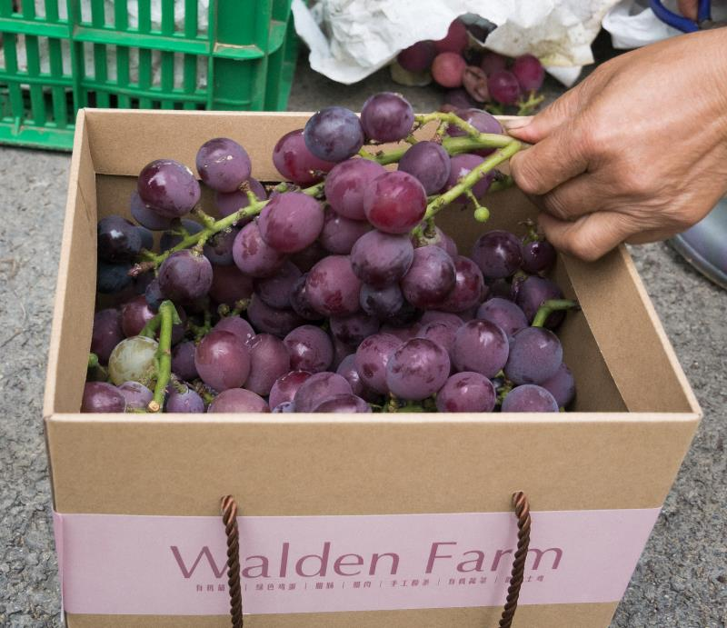 Grapes in box ready to ship
