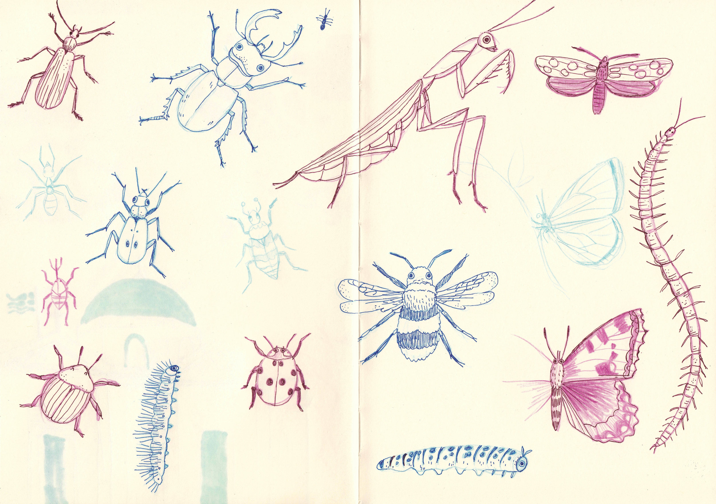 Bug Sketches.jpg